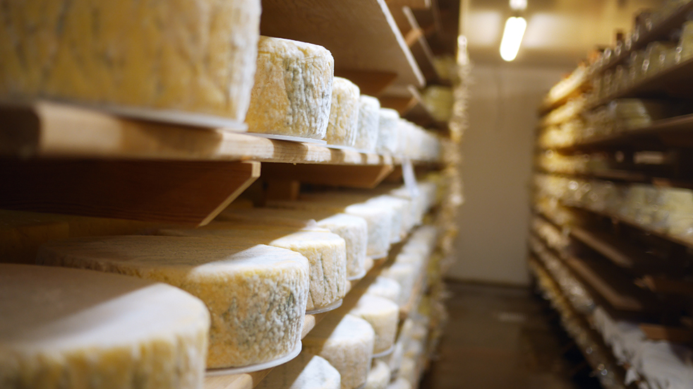 cheese tour experience